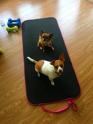dogs yoga